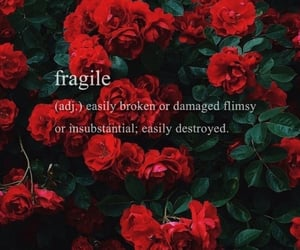 background, fragile, and leaves image