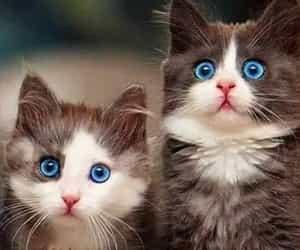 animals, kitties, and cat image