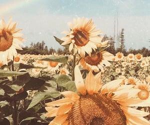 flowers, sun, and sunflowers image