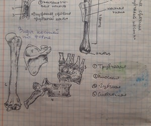biology, bones, and school image