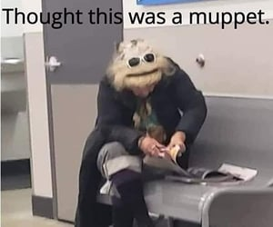 funny, lol, and muppet image