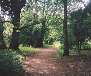 film, floor, and forest image