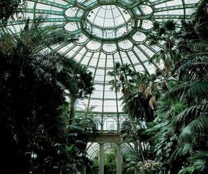 green, plants, and greenhouse image