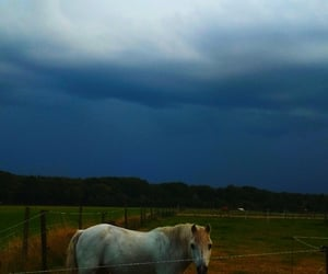 clouds, evening, and horse image