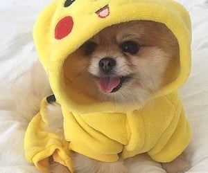 adorable, dog, and little image