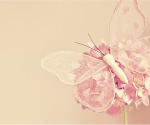 butterfly, pink, and pink butterfly image