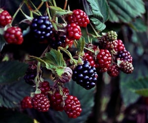 fruit, berries, and blackberry image