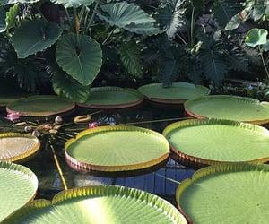 green, pond, and lotus image