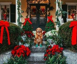 christmas, dog, and holiday image