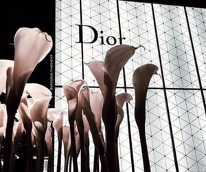 black, dior, and Louis Vuitton image