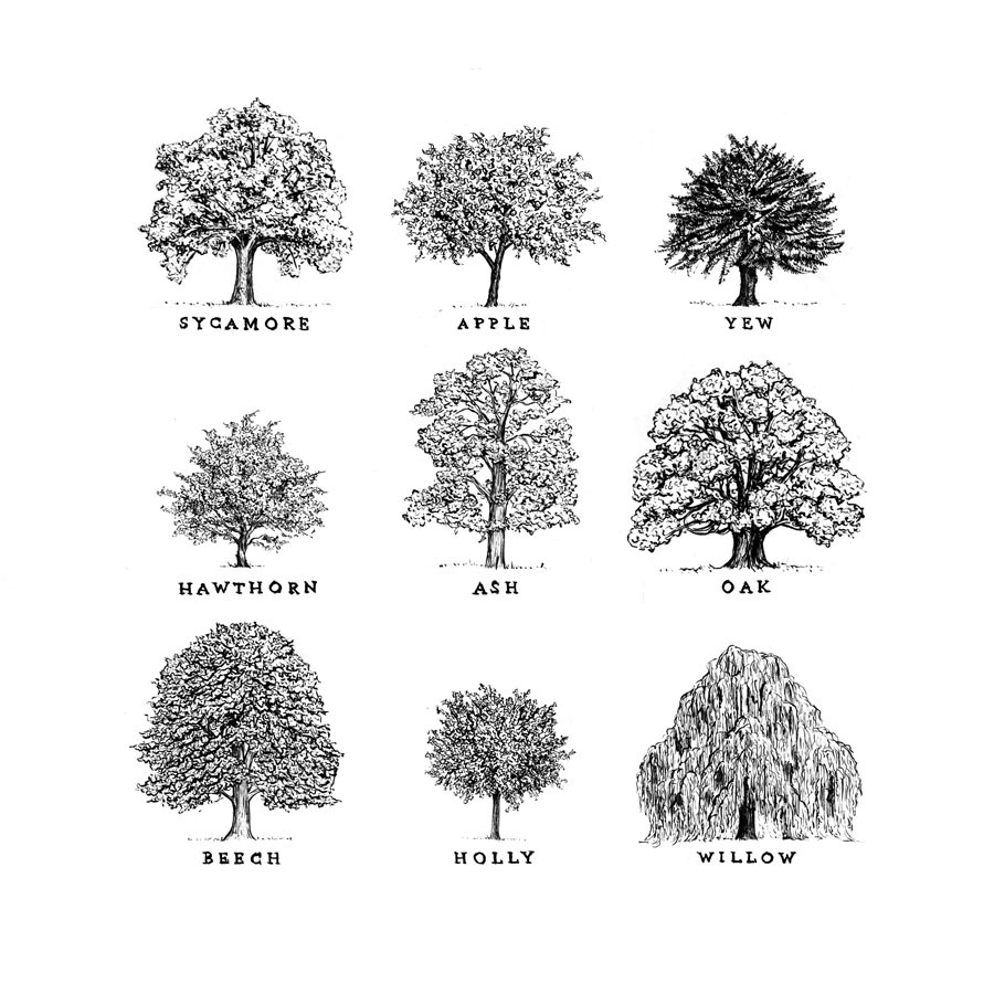 tree, drawing, and nature image