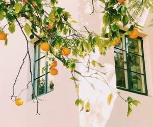 orange, fruit, and white image