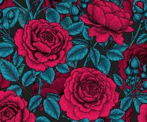 rose, background, and botanical image