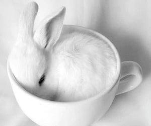 animal, photography, and bunny image