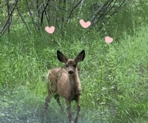 aesthetic, fawn, and bambi image