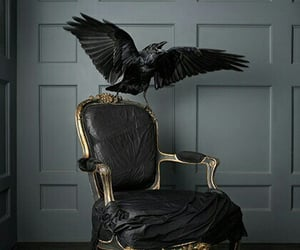 black, chair, and raven image