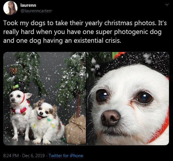 jingle bells, doggy xmas photos, and triggered pup image