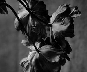 flowers, noir et blanc, and gorgeoussss image