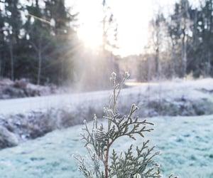 beauty, capture, and christmas image