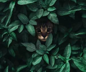 wallpaper, green, and cat image
