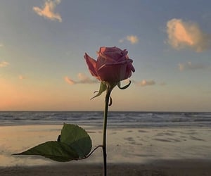flowers, rose, and clouds image
