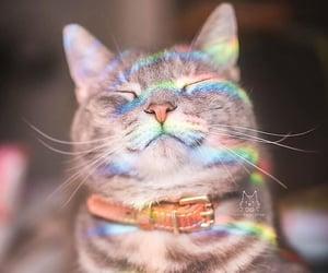 cat and rainbow image