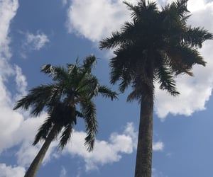 aesthetic, cloud, and coconut image