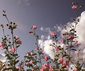 flowers, sky, and pink image