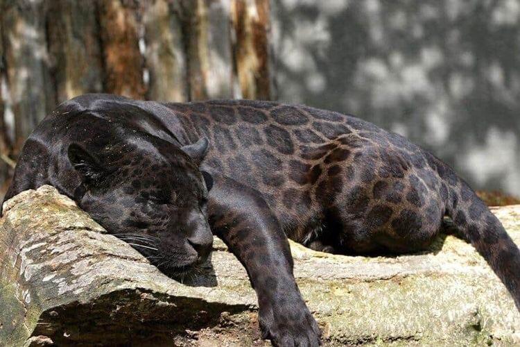 animal and black image