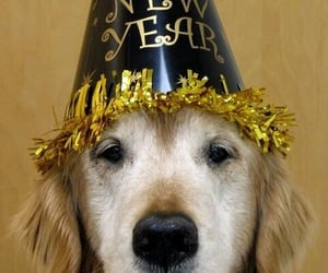 dog and happy new year image