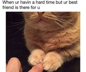 adorable, bff, and cats image