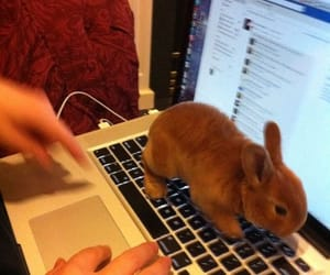 baby, bunnie, and cute image