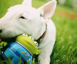dog, toy story, and toy image