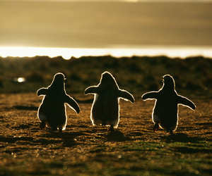 penguin, animal, and sunset image