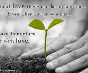 loveislove, truelovequotes, and quote image