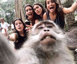 bali-indonesia and monkey selfies image