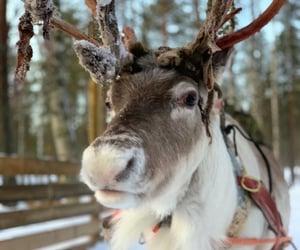 animals, christmas, and cold image