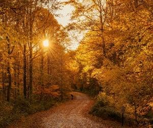 autumn, foliage, and path image