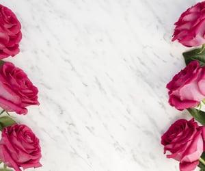 flores, rosas rosadas, and rosas image