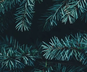 background, green, and wallpaper image