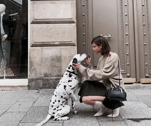 chic, aesthetic, and animal image