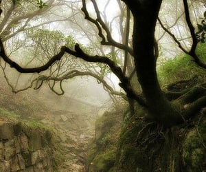 enchanted, middle earth, and misty image