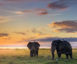 animals, life, and nature image