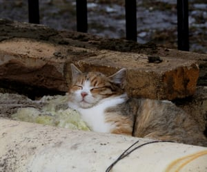 cat, city, and homeless image