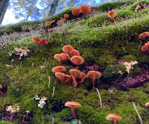 mushrooms, aesthetic, and colorful image