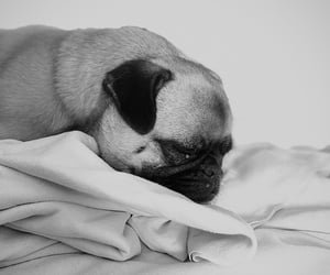 b&w, black and white, and cute dog image