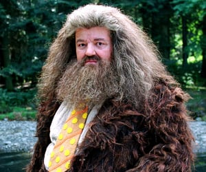 hp, hagrid, and harry potter image