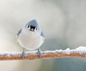 adorable, snow, and blue bird image