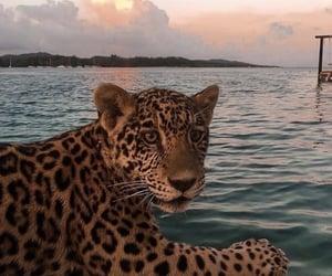 animal, leopard, and sea image