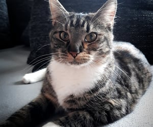 baby, birthday, and cat image